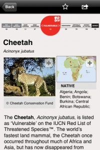 species-on-the-edge-iphone-app-review-cheetah